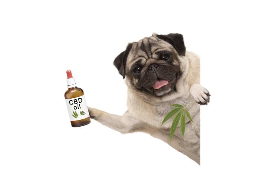 CBD-Öl Hund