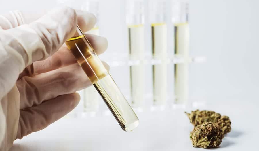 CBD-Öl Qualität Laboranalyse