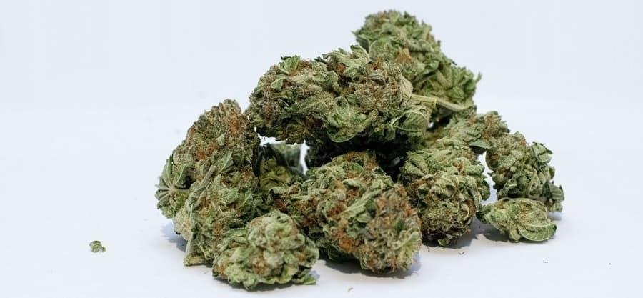 CBD Blüten rauchen kaufen