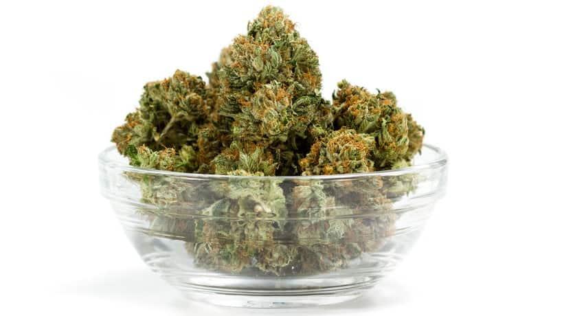 CBD-Blüten-Cannabis-kaufen