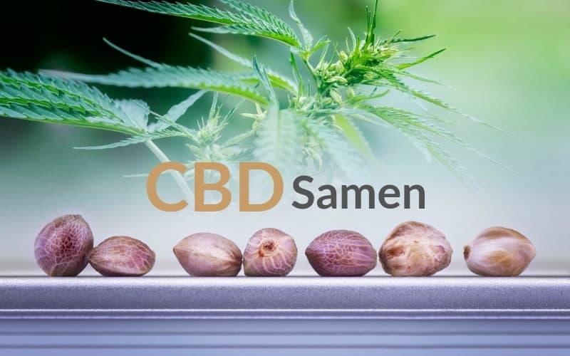 CBD-Samen-Kaufen