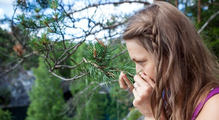 CBD Terpene Duft Qualität