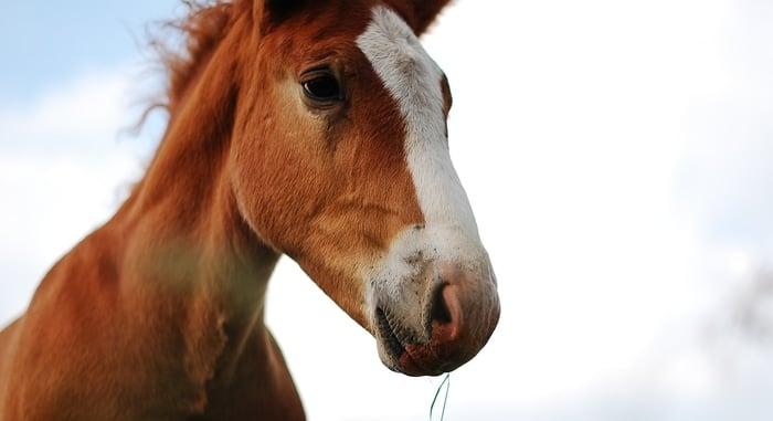 Hanfsamen für Pferde