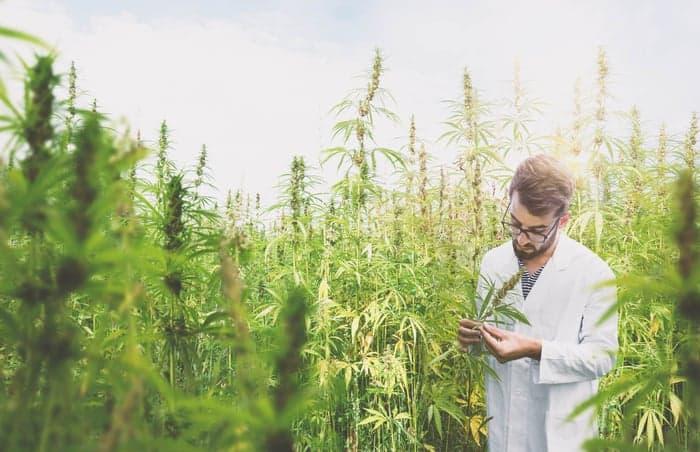 Unterschied-Hanf-Cannabis-Marihuna-Haschisch