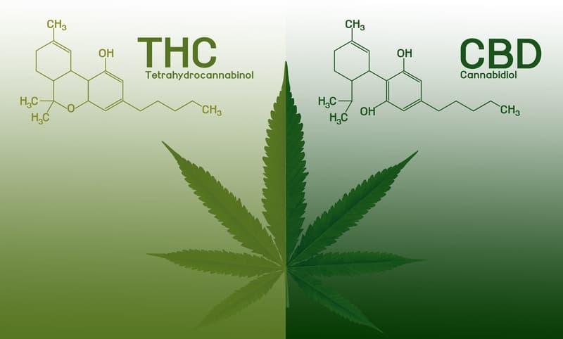 Unterschied zwischen THC und CBD