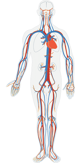 hanfprotein-herzkreislauf-gesund