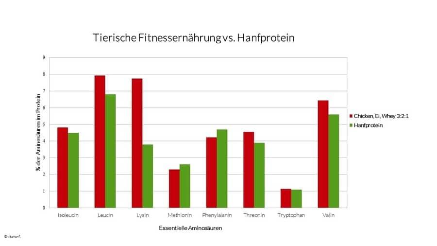 tierische-Fitnessernährung-vs-Hanfprotein